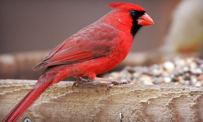 Wild Birds Unlimited  - Multiple Locations: $15 for $30 Worth of Bird-Feeding Merchandise and Supplies at Wild Birds Unlimited. Four Locations Available.