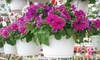 Huizenga Brothers Greenhouse - Wyoming: $10 for Two 10-Inch Hanging Baskets at Huizenga Brothers Greenhouse ($21.98 Value)