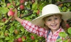 Up to 56% Off Apple-Picking Experience for 2 or 4 in Ellijay