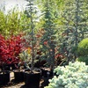 Half Off at Arbor Day Nursery in Riverton