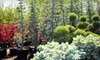 Arbor Day Nursery - Riverton: $20 for $40 Worth of Pumpkins, Plants, and Gardening Goods at Arbor Day Nursery in Riverton