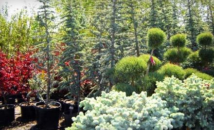 $40 Groupon to Arbor Day Nursery  - Arbor Day Nursery in Riverton
