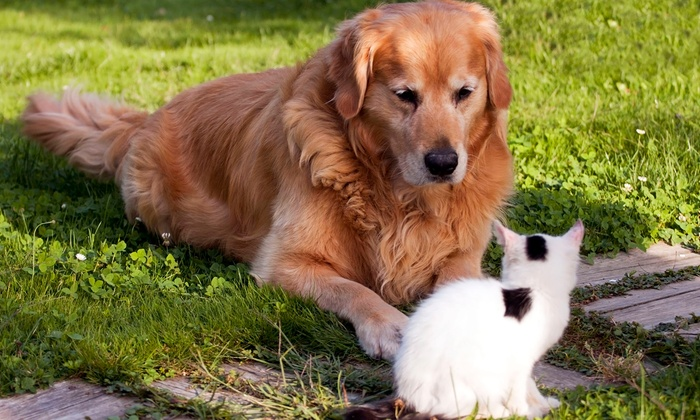 Sheridan West Animal Clinic - The Shops At Cooper City: Complete Exam for One or Two Pets at Sheridan West Animal Clinic (78% Off)