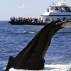 38% Off Tour from Provincetown Whale Watches