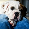 Roaring Brook Kennels - Canton: $25 for $50 Worth of Boarding, Daycare, or Training at Roaring Brook Kennels