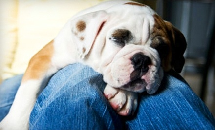 $50 Groupon to Roaring Brook Kennels - Roaring Brook Kennels in Canton