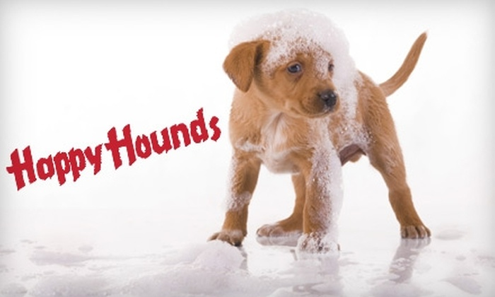 Happy Hounds Pet Grooming - Northeast Colorado Springs: $35 for $80 Worth of Dog-Grooming Services at Happy Hounds Pet Grooming