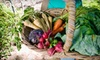 The Root Sustainable Food LLC- BK-DO NOT CALL: $40 for Two Weeks of Local Sustainable Fruit and Vegetable Delivery from The Root ($80 Value)
