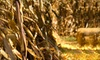 Up to 58% Off Corn-MAiZE Adventure in Dunstable