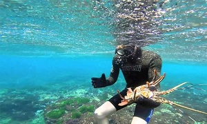 La Jolla Water Sports: Two-Hour Lobster-Diving Tour for One or Two from La Jolla Water Sports (Up to 57% Off)