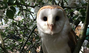 Gentleshaw Wildlife Centre: Family Entry to Gentleshaw Wildlife Centre (50% Off)