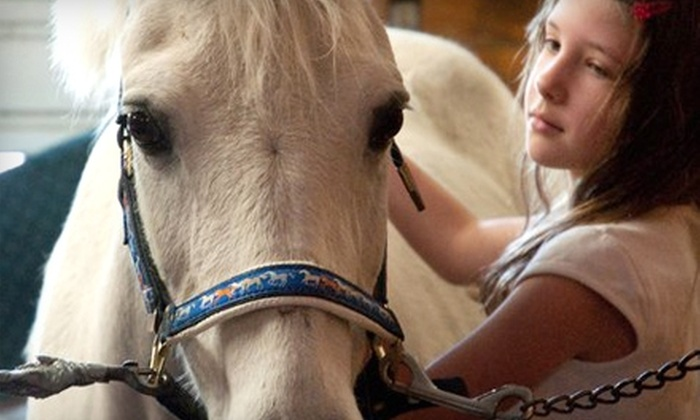 Woodgate Farm Equestrian - West Boylston: $39 for Two Personal Horseback-Riding Lessons and a Horse-Grooming Tutorial at Woodgate Farm Equestrian in West Boylston ($120 Value)