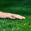 Up to Half Off Weed and Crabgrass Lawn Treatment