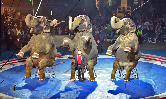The Jordan World Circus - Paulhamus Arena: Jordan World Circus (March 25–27)