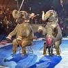 Jordan World Circus – Up to 50% Off
