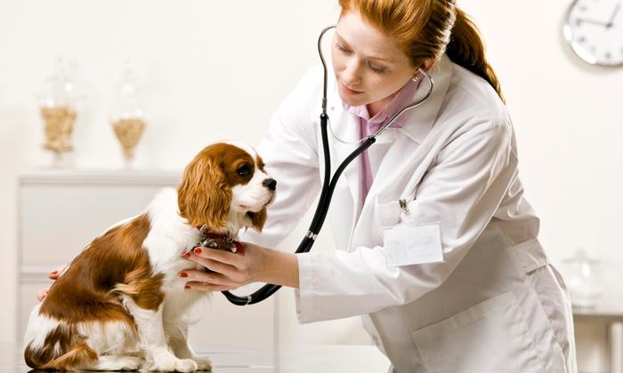 Vetpronto - Seattle: $48 for $79 Worth of Veterinary Services — VetPronto