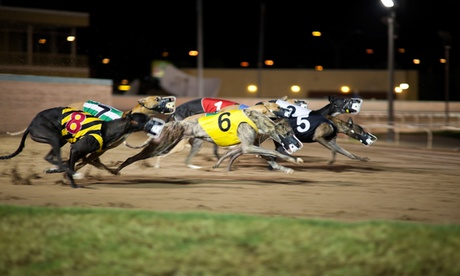 Dog Racing with Meal and Drink for Two, Four or Six (Saturday's included) at Henlow Racing Limited (Up to 74% Off)