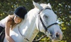 Shenanigans Farm - Addison: $55 for a Pony Princess Horseback-Riding Lesson and Grooming Package at Shenanigans Farm ($120 Value)