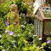Half Off Plants and Pumpkins at Harb's Oasis