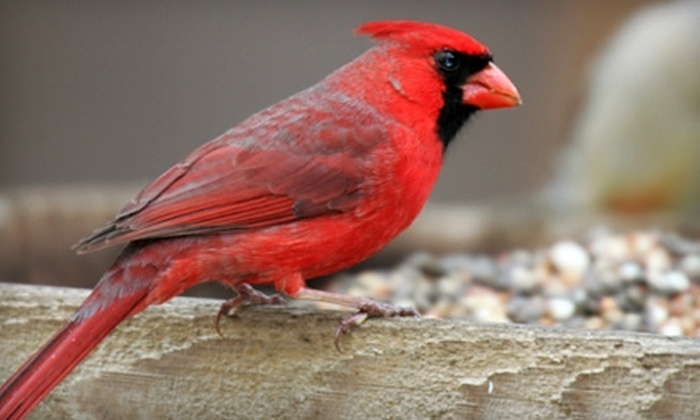 The Henderson House Inn and Retreat Center - Stafford: $225 for a Bird-Watching and Photography Weekend for Two at The Henderson House Inn and Retreat Center in Stafford ($450 Value)