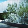 Half Off Art Museum Membership in Scottsdale