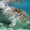 Up to 55% Off Sea-Mammal Tours in Crystal River