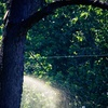 56% Off Tree or Brush Removal