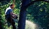 Woodsmen Brush and Tree LLC - Grand Rapids: $99 for Three Man-Hours of Tree or Brush Removal from Woodsmen Brush and Tree LLC ($225 Value)