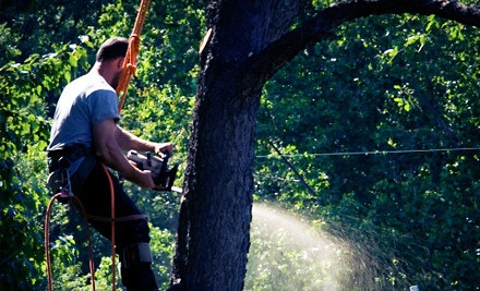Woodsmen Brush and Tree LLC - Woodsmen Brush and Tree LLC in