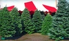 $10 for Christmas Trees and Holiday Wreaths