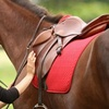 55% Off Riding Lessons in North Salem