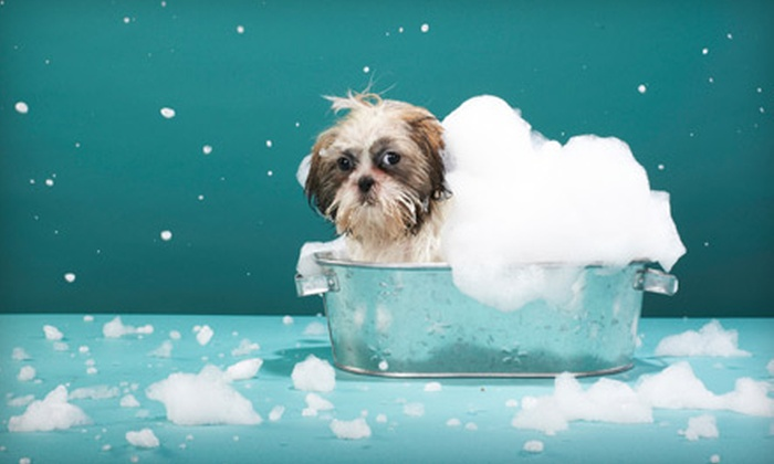 Bark Bath and Beyond - Daytona Beach: One Year of Unlimited Self-Serve Dog or Cat Washes at Bark Bath and Beyond. Six Options Available.