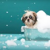 Half Off Unlimited Self-Serve Dog or Cat Washes