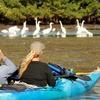 Up to 54% Off Kayak Tour in Merritt Island
