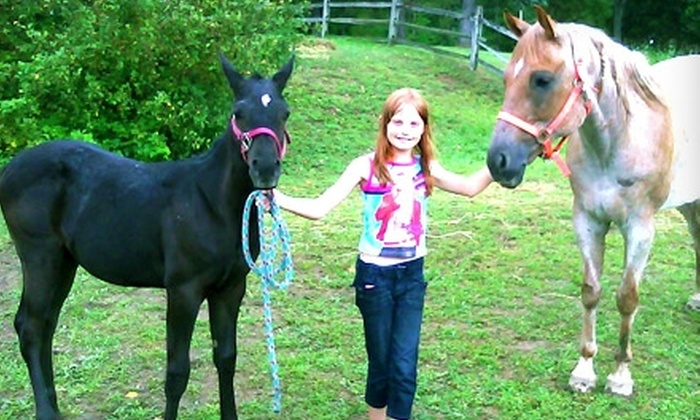 White Horse Equestrian Deals 2011-2013 - Streetsboro: $30 for Three One-Hour Private Riding Lessons at White Horse Equestrian ($60 Value). Two Locations Available.