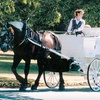 Half Off Carriage Tour from Black Beauty Line