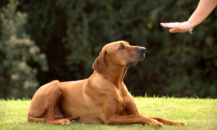 Master Dog Training - Woodland Hills: $36 for $80 Worth of Obedience Training at Master Dog Training