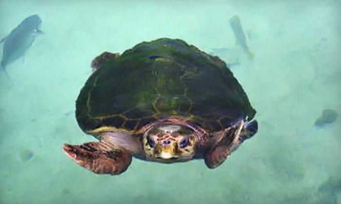 Florida Oceanographic Society - Stuart: $10 for Two Admissions to the Florida Oceanographic Society in Stuart
