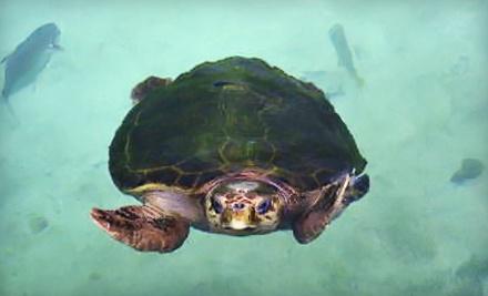 Florida Oceanographic Society - Florida Oceanographic Society in Stuart