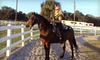 Davis Stable - West Ellenton: One or Two 90-Minute Horseback-Riding Lessons from Rick Davis Stables in Palmetto (Half Off)