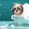 Up to 63% Off Dog Grooming