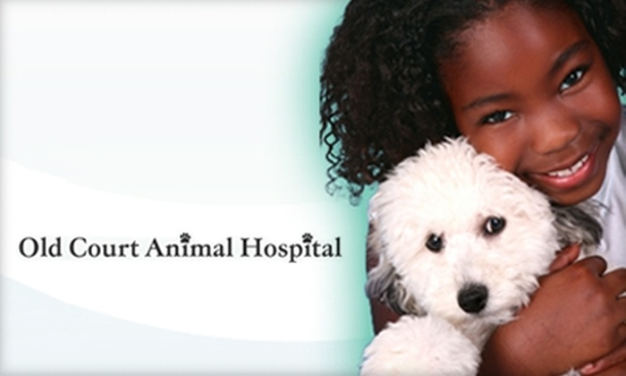 Old Court Animal Hospital - Baltimore: $25 for Pet-Wellness Exam, $25 Credit for Additional Services, and 25% Off Blood Profile and Dental Work ($75 Value)