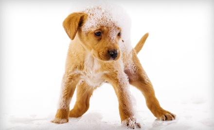 Pet Supplies Plus - Pet Supplies Plus in Toledo