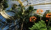 Buffalo and Erie County Botanical Gardens - South Park: Family, Grandparent, or Individual Membership to Buffalo Botanical Gardens (Up to 63% Off)