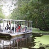 Up to 54% Off Swamp Boat Tour in LaPlace