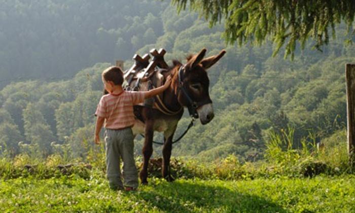 La ferme aux grandes oreilles - Torreilles: Visite de La Ferme aux Grandes Oreilles avec balade à dos d'âne dès 7 €