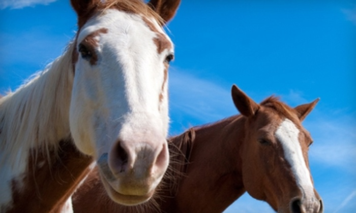 Arnold Estates Equestrian and Log Cabin Resort - Sevierville: $25 for One-Hour Trail Ride for Two at Arnold Estates Equestrian and Log Cabin Resort in Sevierville ($50 Value)