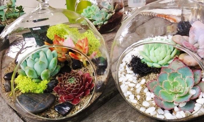 Mother's Day Terrarium Making Class - Washington: Build Your Own Mother's Day Terrarium with Succulents