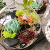Build Your Own Mother's Day Terrarium with Succulents