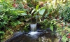 Sunken Gardens – Up to 52% Off